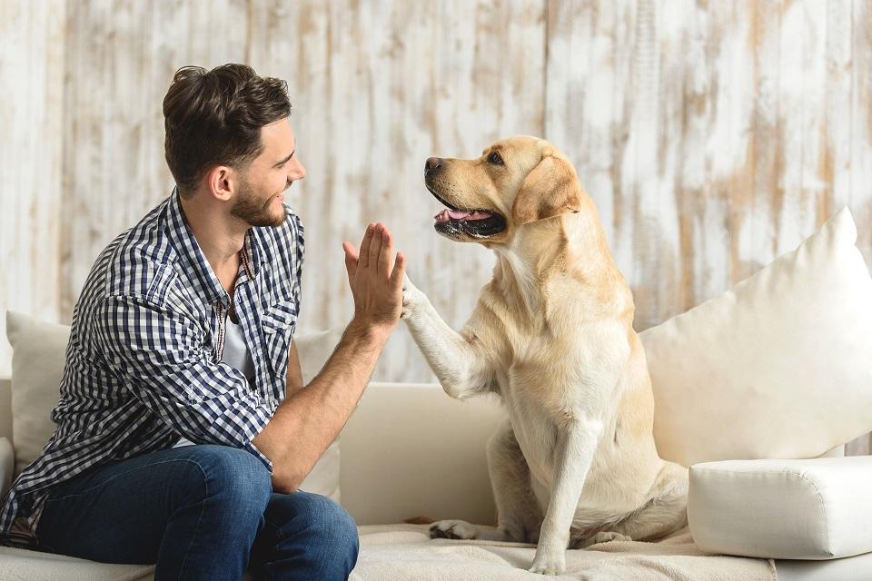 Quel budget allouer à mon nouveau chien?